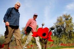 Κόκκινη άνθηση λουλουδιών Anemone Στοκ Φωτογραφία