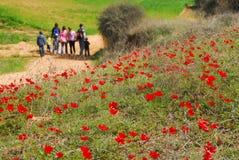 Κόκκινη άνθηση λουλουδιών Anemone Στοκ εικόνα με δικαίωμα ελεύθερης χρήσης