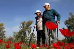 Κόκκινη άνθηση λουλουδιών Anemone Στοκ Φωτογραφίες