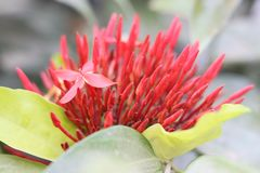 Κόκκινη άνθιση λουλουδιών Στοκ φωτογραφία με δικαίωμα ελεύθερης χρήσης