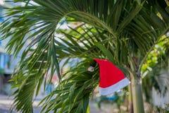 Κόκκινη ένωση καπέλων Santa ` s στο φοίνικα στην τροπική παραλία Χριστούγεννα στην τροπική έννοια κλίματος Στοκ φωτογραφίες με δικαίωμα ελεύθερης χρήσης