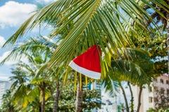 Κόκκινη ένωση καπέλων Santa ` s στο φοίνικα στην τροπική παραλία Χριστούγεννα στην τροπική έννοια κλίματος Στοκ εικόνες με δικαίωμα ελεύθερης χρήσης