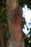 Κόκκινη ένωση κλάδων από το δέντρο Στοκ Φωτογραφίες