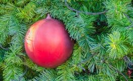 Κόκκινη ένωση σφαιρών Χριστουγέννων στο δέντρο κλείστε επάνω Στοκ Εικόνα
