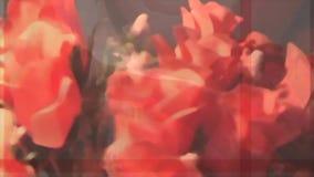 Κόκκινη αγάπη λουλουδιών ανθοδεσμών τριαντάφυλλων φιλμ μικρού μήκους