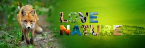 Κόκκινη αλεπού με τη φύση αγάπης κειμένων Στοκ εικόνα με δικαίωμα ελεύθερης χρήσης