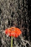 κόκκινη αναζωογόνηση Στοκ φωτογραφία με δικαίωμα ελεύθερης χρήσης
