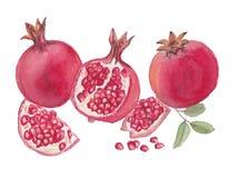 Κόκκινη απεικόνιση watercolor ροδιών Στοκ εικόνες με δικαίωμα ελεύθερης χρήσης