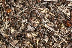 Κόκκινη δασική κινηματογράφηση σε πρώτο πλάνο μυρμηγκιών Στοκ φωτογραφία με δικαίωμα ελεύθερης χρήσης
