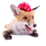 Κόκκινη αλεπού με ένα τόξο στοκ εικόνα με δικαίωμα ελεύθερης χρήσης