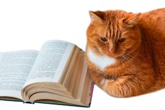 Κόκκινη γάτα και βιβλίο, σπιτική μεγάλη γάτα με το βιβλίο, ανοικτό βιβλίο και κόκκινο Στοκ φωτογραφίες με δικαίωμα ελεύθερης χρήσης
