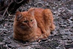 Κόκκινη γάτα και φθινόπωρο στοκ εικόνες