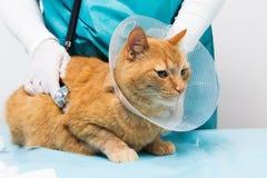 Κόκκινη γάτα με το στήριγμα λαιμών Στοκ φωτογραφία με δικαίωμα ελεύθερης χρήσης