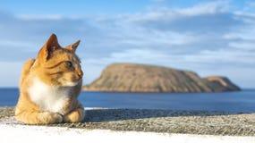 Κόκκινη γάτα μπροστά από το νησί αιγών Ilheu DAS Cabras δίπλα Angra do Heroismo, Terceira, νησιά των Αζορών, Πορτογαλία Στοκ φωτογραφίες με δικαίωμα ελεύθερης χρήσης