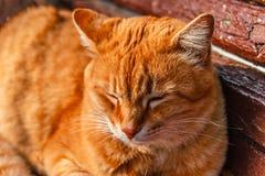 Κόκκινη γάτα που βρίσκεται σε έναν πάγκο και που κοιμάται στις ακτίνες του φωτός του ήλιου στοκ φωτογραφία