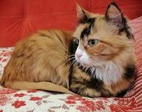Γάτα στις διακοπές στοκ εικόνες
