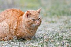 Κόκκινη γάτα στην οδό που στον ήλιο στοκ εικόνα