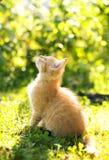 Κόκκινη γάτα στον κήπο στοκ φωτογραφίες