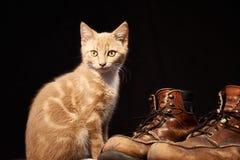 Κόκκινη γάτα στο μαύρο υπόβαθρο Στοκ εικόνες με δικαίωμα ελεύθερης χρήσης