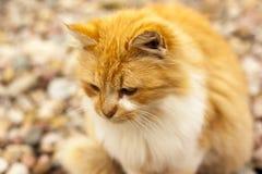 Κόκκινη γάτα, υπαίθρια, κινηματογράφηση σε πρώτο πλάνο Στοκ εικόνες με δικαίωμα ελεύθερης χρήσης