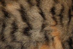 Κόκκινη γούνα Στοκ εικόνα με δικαίωμα ελεύθερης χρήσης