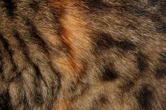Κόκκινη γούνα Στοκ φωτογραφία με δικαίωμα ελεύθερης χρήσης