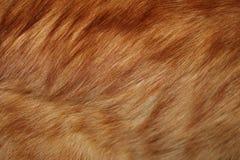 Κόκκινη γούνα Στοκ Εικόνα