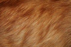 Κόκκινη γούνα Στοκ Εικόνες