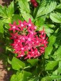 Κόκκινη δέσμη των μικρών λουλουδιών Στοκ Φωτογραφίες