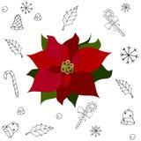 Κόκκινη ευφορβία Λουλούδι Χριστουγέννων διακόσμηση ελεύθερη απεικόνιση δικαιώματος