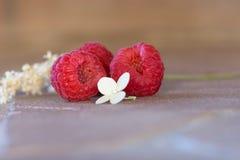 Κόκκινη ζωή μούρων και λουλουδιών ακόμα Στοκ Εικόνα