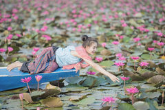 Κόκκινη θάλασσα Lotus Στοκ εικόνα με δικαίωμα ελεύθερης χρήσης