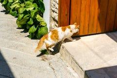 Κόκκινη και άσπρη γάτα στο κατώφλι του σπιτιού στη παραθεριστική πόλη _ στοκ εικόνες