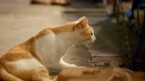 Κόκκινη και άσπρη περιπλανώμενη γάτα που βρίσκεται στην επίγεια τη νύχτα οδό απόθεμα βίντεο