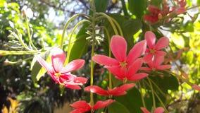 Κόκκινη και άσπρη συστάδα λουλουδιών στοκ φωτογραφία