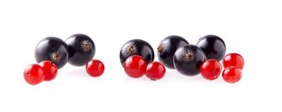 Κόκκινη και μαύρη σταφίδα που απομονώνεται στο άσπρο υπόβαθρο στοκ εικόνες με δικαίωμα ελεύθερης χρήσης