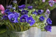 Κόκκινη και μπλε ρύθμιση λουλουδιών άνοιξη: anemones, ranoncullus και Στοκ Φωτογραφία