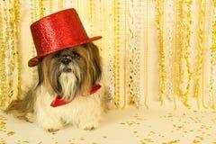 κόκκινη κορυφή συμβαλλόμενων μερών καπέλων σκυλιών Στοκ Φωτογραφία