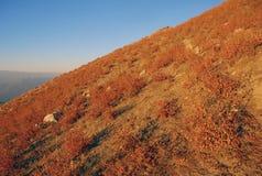 Κόκκινη κλίση στα βουνά της Τιέν Σαν το φθινόπωρο στοκ εικόνα