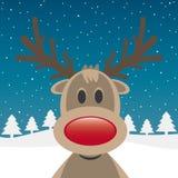 Κόκκινη μύτη ταράνδων του Rudolph Στοκ φωτογραφίες με δικαίωμα ελεύθερης χρήσης