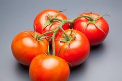Κόκκινη ντομάτα, με τις πτώσεις του νερού που δείχνει τη φρεσκάδα και την υγεία στοκ εικόνες