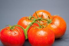 Κόκκινη ντομάτα, με τις πτώσεις του νερού που δείχνει τη φρεσκάδα και την υγεία στοκ φωτογραφία με δικαίωμα ελεύθερης χρήσης