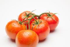 Κόκκινη ντομάτα, με τις πτώσεις του νερού που δείχνει τη φρεσκάδα και την υγεία στοκ φωτογραφίες με δικαίωμα ελεύθερης χρήσης
