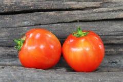 Κόκκινη ντομάτα Στοκ Εικόνα