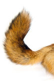κόκκινη ουρά αλεπούδων Στοκ φωτογραφία με δικαίωμα ελεύθερης χρήσης