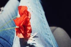 Κόκκινη παπαρούνα δύο στα γόνατά του στα τζιν Στοκ Εικόνα