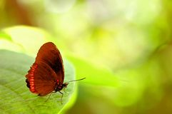 Κόκκινη πεταλούδα πλαισίων (underside) στο φύλλο Στοκ φωτογραφία με δικαίωμα ελεύθερης χρήσης