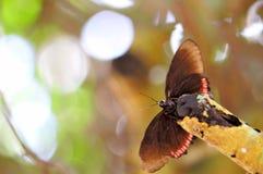 Κόκκινη πεταλούδα πλαισίων (underside) Στοκ φωτογραφία με δικαίωμα ελεύθερης χρήσης