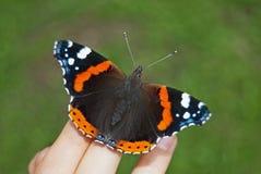 Κόκκινη πεταλούδα atalanta της Vanessa ναυάρχων στοκ εικόνες