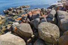 Κόκκινη πορτοκαλιά ανάπτυξη λειχήνων στους σχηματισμούς βράχων γρανίτη, δύσκολο coa Στοκ Εικόνες